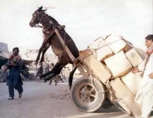 donkey-300x231
