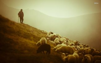 25818-shepherd-and-the-sheep-1680x1050-photography-wallpaper